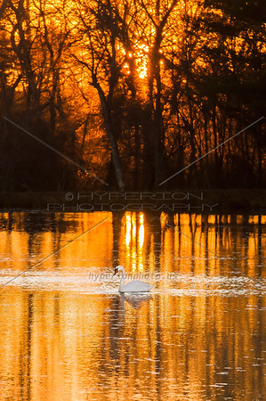 On Golden Pond - Carver, MA