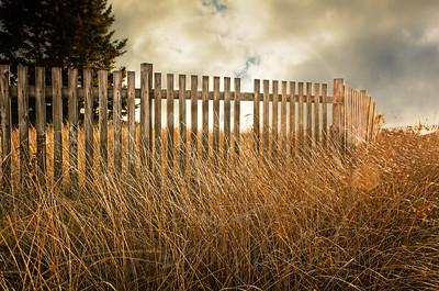 Pemaquid Beach Grasses