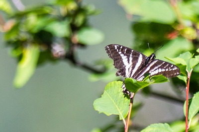 Butterly off the Trail