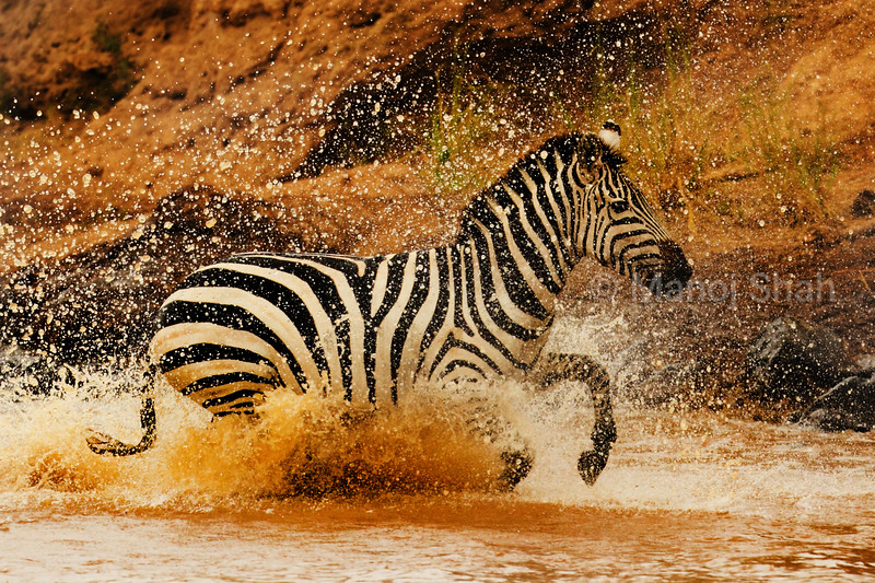 Zebra crossing Mara River