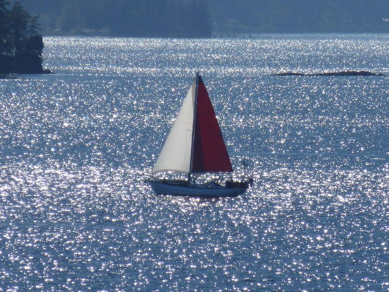 Salish Sea '14