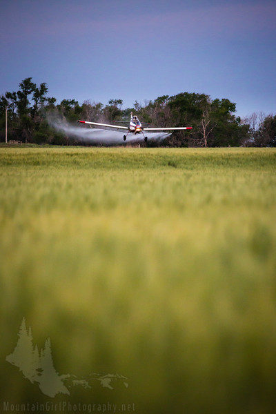 Spraying the Wheat