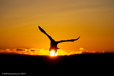 The Sun Grab