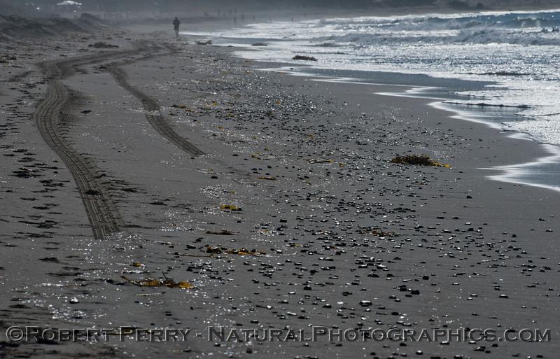 Salpa fusiformis masses on sand 2013 01-31 Zuma-001