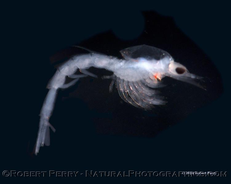 ID shrip darkfield Sea_World_outside Marina del Rey_2004_08-10--014modCROP