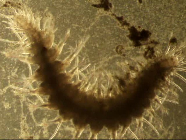 Worm Video 1