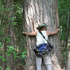 Tiana tries to lift large Cottonwood