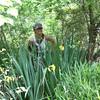 Tiana checks the Iris pseudocoris along the Trinity River at Todd Island