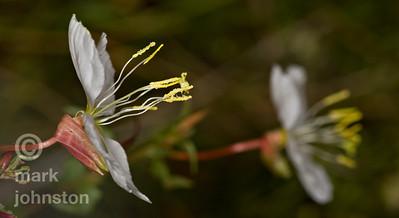 Wildflowers in the desert near Escalante, UT.