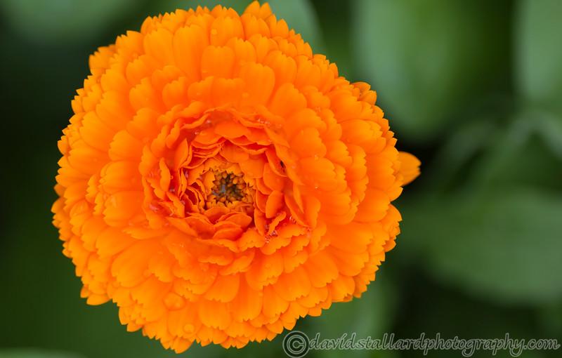 IMAGE: http://www.davidstallardphotography.com/Plant-Life/Kew-Gardens-02-06-12/i-3pTNP42/0/L/Kew-Gardens-02-06-12-059-L.jpg