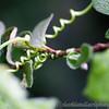 Kew Gardens 02-06-12  018