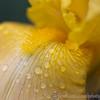 Kew Gardens 02-06-12  003