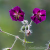 Kew Gardens 02-06-12  013