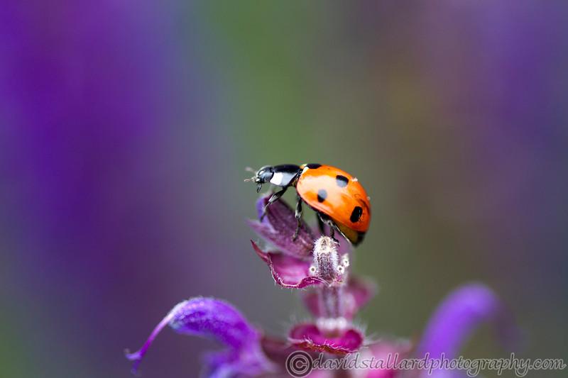 IMAGE: http://www.davidstallardphotography.com/Plant-Life/Kew-Gardens-02-06-12/i-bjbRzX8/0/L/Kew-Gardens-02-06-12-074-L.jpg