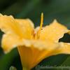 Kew Gardens 02-06-12  009