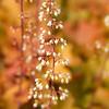 Kew Gardens 03-10-15 0017
