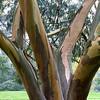 Kew Gardens 03-10-15 0009