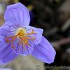 Kew Gardens 03-10-15 0011