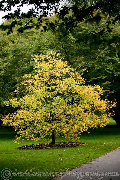 Kew Gardens 03-10-15 0001