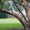 Kew Gardens 03-10-15 0006