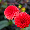 Kew Gardens 03-10-15 0013