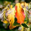 Kew Gardens 03-10-15 0014