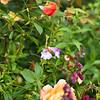 Kew Gardens 03-10-15 0020