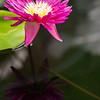 Kew Gardens  06-07-19 0025