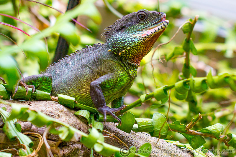 Kew Gardens  06-07-19 0093