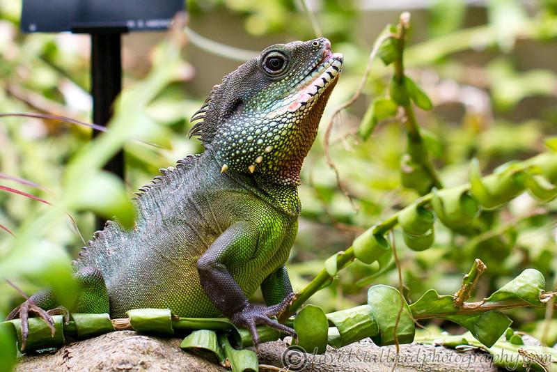 Kew Gardens  06-07-19 0092