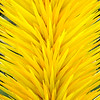 Kew Gardens  06-07-19 0011