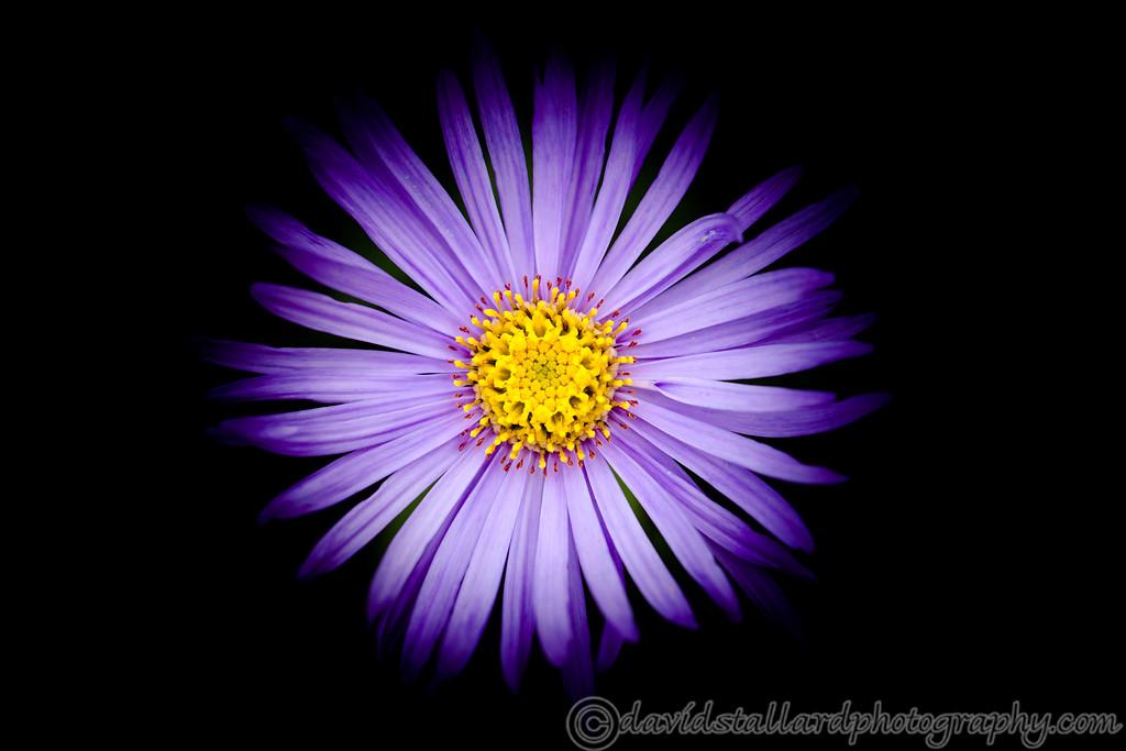 IMAGE: https://photos.smugmug.com/Plant-Life/Kew-Gardens/Kew-Gardens-06-07-19/i-FnLf82n/0/c743d386/XL/Kew%20Gardens%20%2006-07-19%200129-XL.jpg