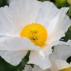 Kew Gardens  06-07-19 0108