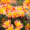 Kew Gardens  06-07-19 0057
