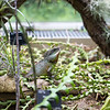 Kew Gardens  06-07-19 0090