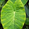 Kew Gardens  06-07-19 0087