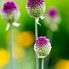 Kew Gardens  06-07-19 0052