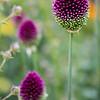Kew Gardens  06-07-19 0050