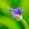 Kew Gardens  06-07-19 0055