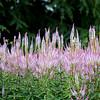 Kew Gardens  06-07-19 0064