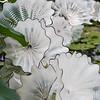 Kew Gardens  06-07-19 0026