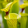 Kew Gardens  06-07-19 0074