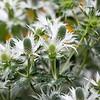 Kew Gardens  06-07-19 0048
