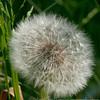 Kew Gardens 25-05-10 - 009