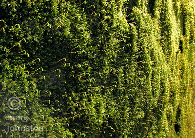 A mossy wall in the mountains of the Izu Peninsula, Shizuoka Prefecture, Japan.