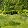 RHS Savill Gardens 14-06-14  0017