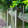 RHS Savill Gardens 14-06-14  0001