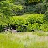 RHS Savill Gardens 14-06-14  0005