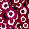 RHS Savill Gardens 25-06-15  0018