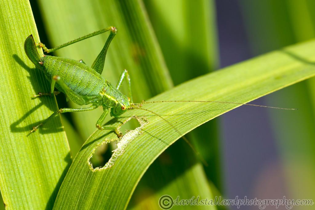 IMAGE: http://www.davidstallardphotography.com/Plant-Life/Savill-Garden-11-08-12/i-PpSfC63/0/XL/Savill%20Garden%2011-08-12%20%20146-XL.jpg